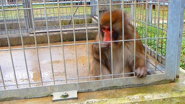 お猿さん.jpg
