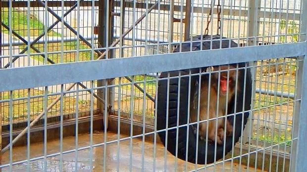 お猿さん3.jpg