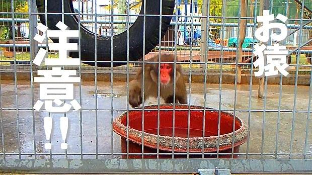 お猿注意.jpg