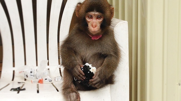 可愛いお猿.jpg
