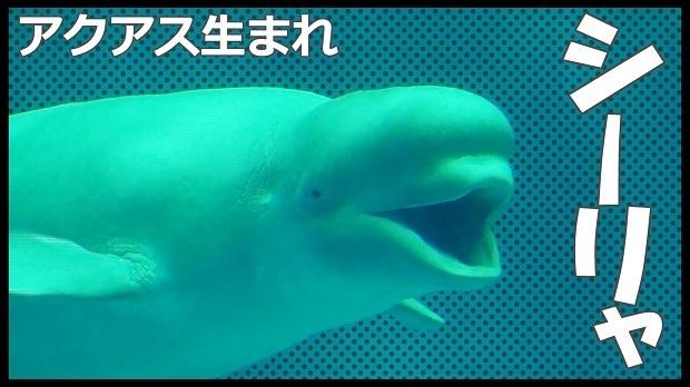 シーリャ紹介.jpg
