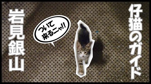 仔猫のガイド.jpg